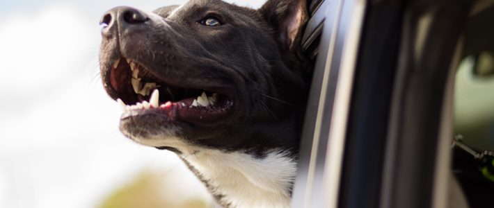 5 Ingenious Products That Make Travel With Dogs Safe and Easy